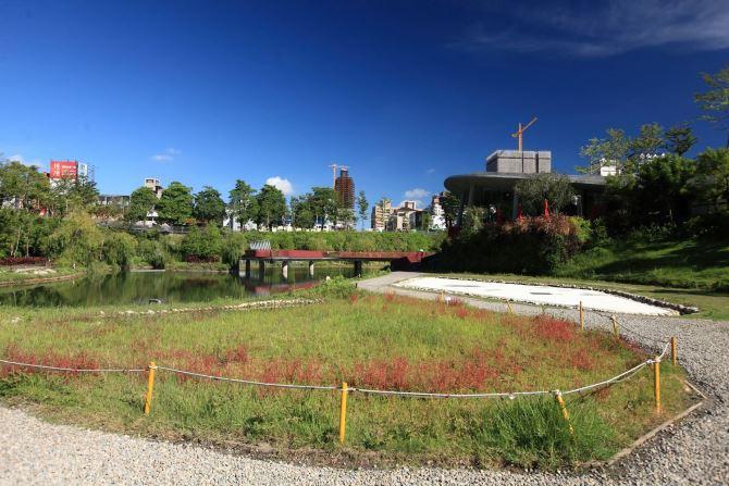 Maple Garden (4)