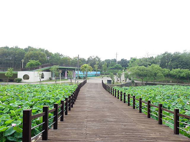 baihe-lotus (4)
