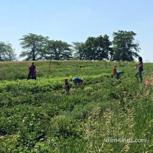 Let's Go Berry Picking in Central Iowa – dsm4kids.com