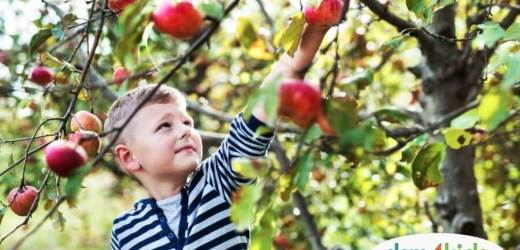 Apple Orchards Near Des Moines – 2019 Edition