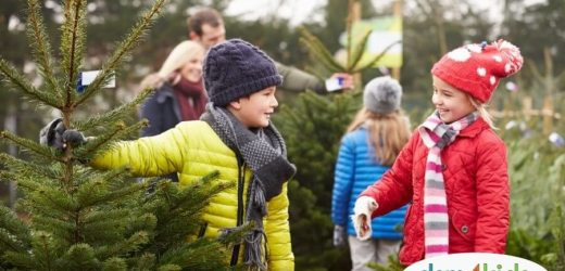 Christmas & Holidays 2019: Central Iowa Christmas Tree Farms
