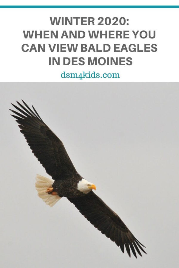 Winter 2020: When and Where You Can View Bald Eagles in Des Moines – dsm4kids.com