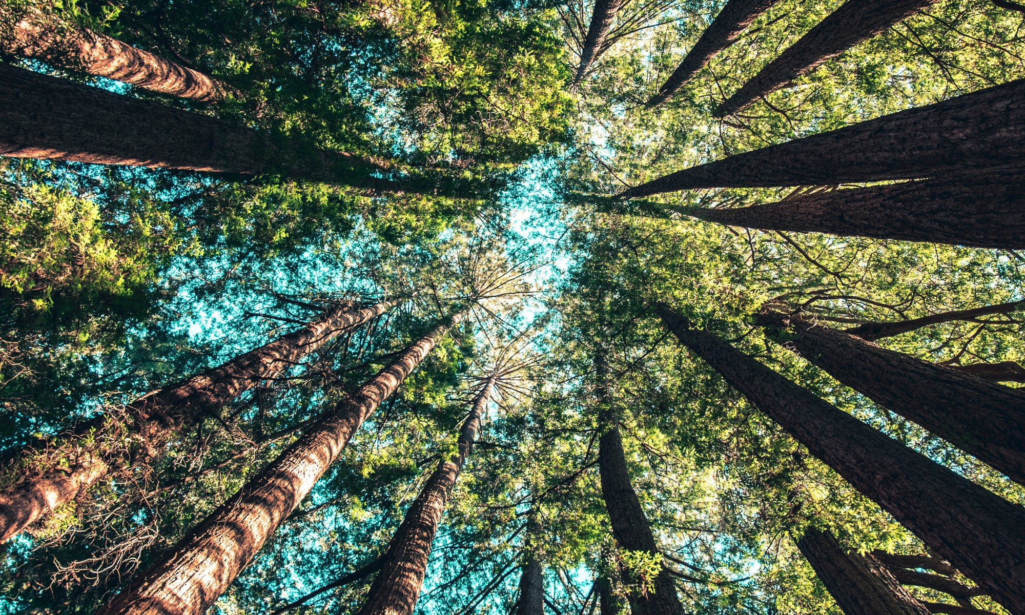 In nature looking up at trees during daytime