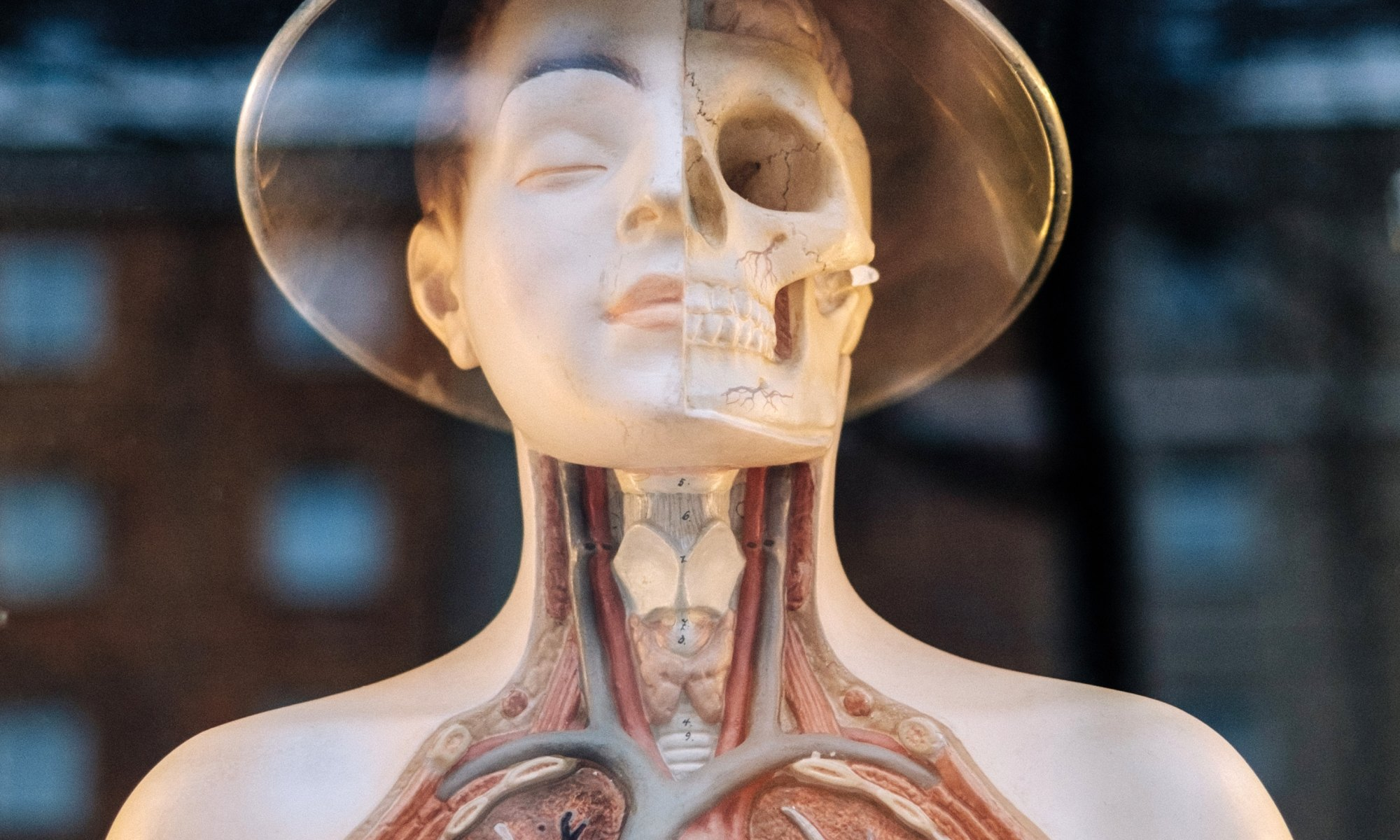 Human anatomy display of cocaine effects on the body