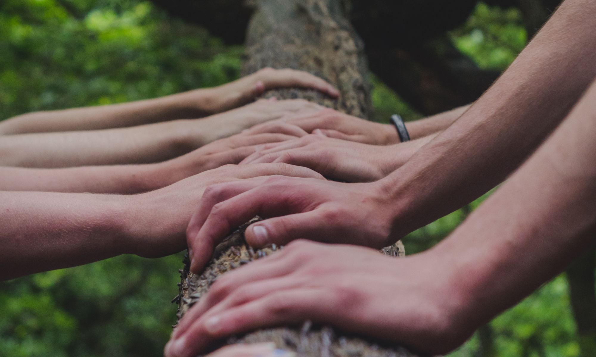 Team holding their hands together on a tree