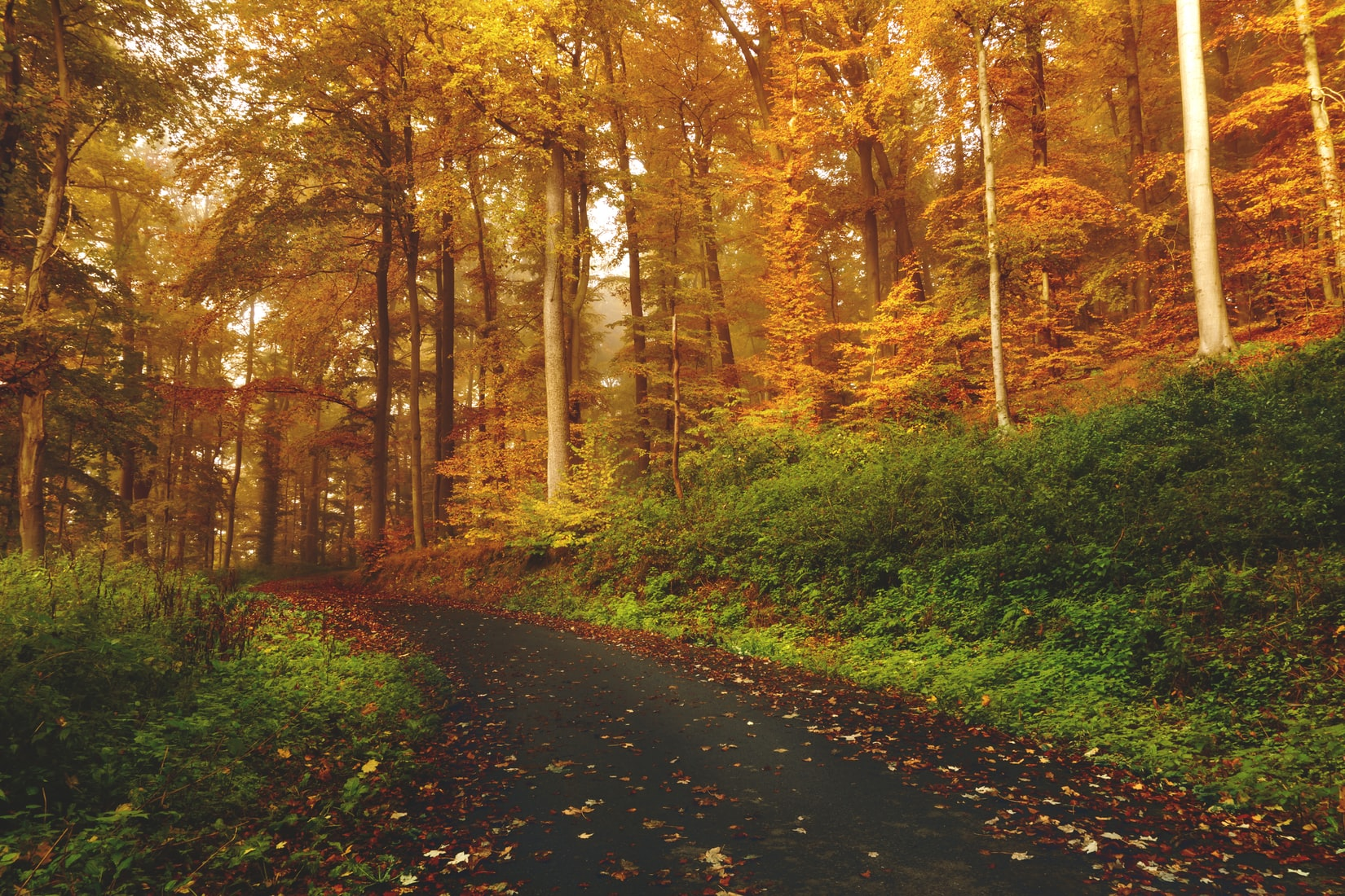 Road going through forest during fall
