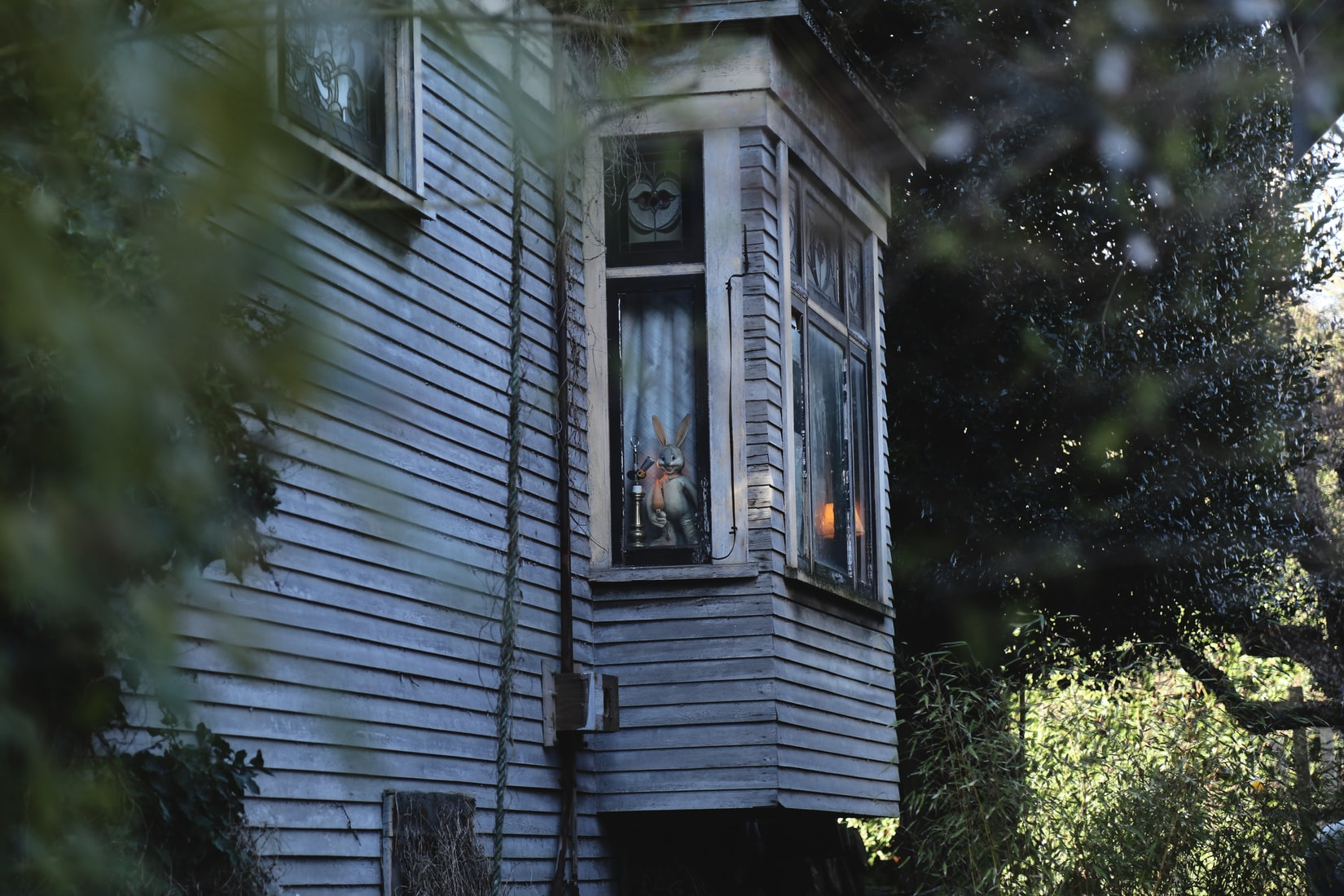 Shallow focus photography of old wooden house beside trees