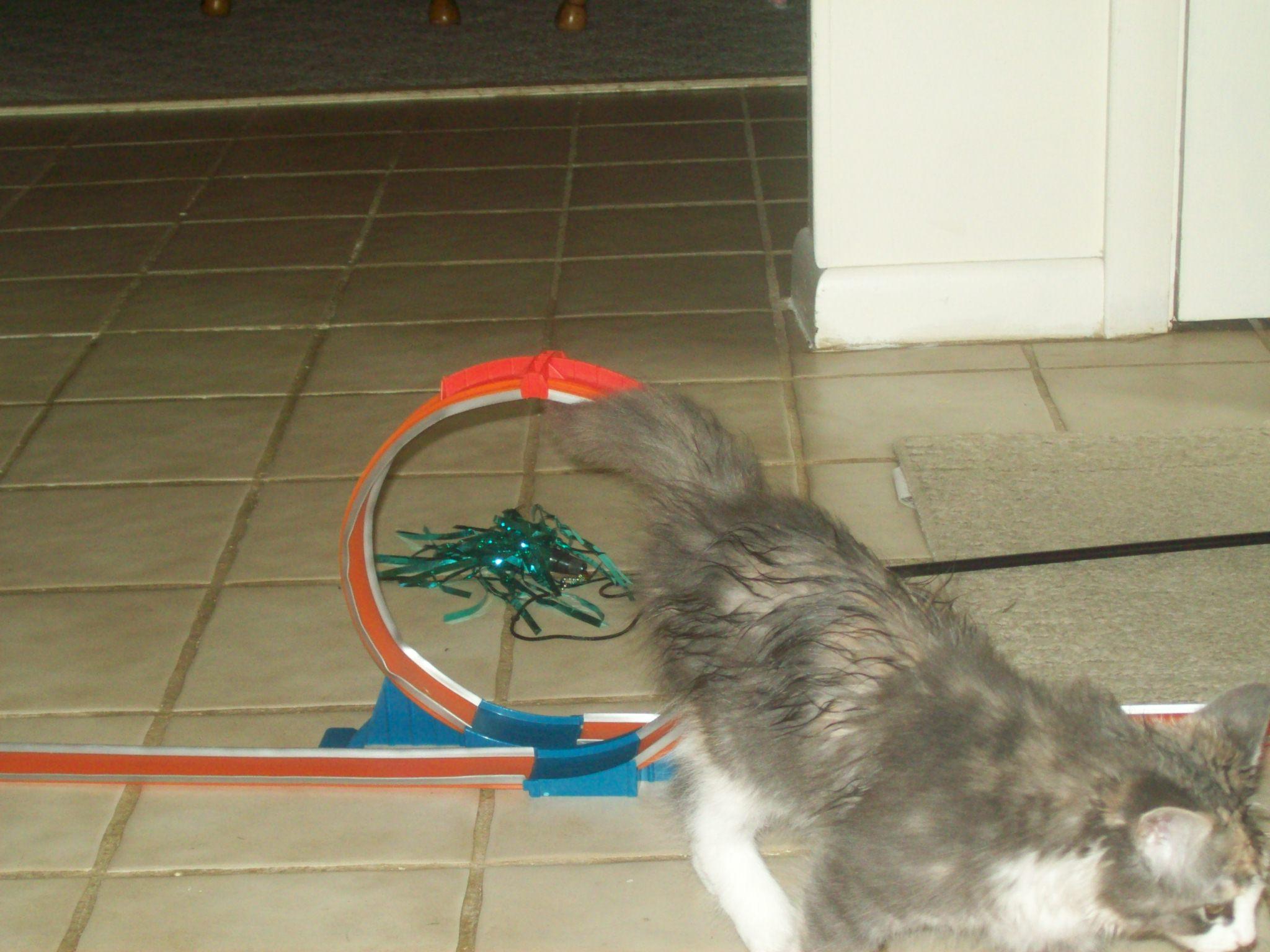 Cat through the loop