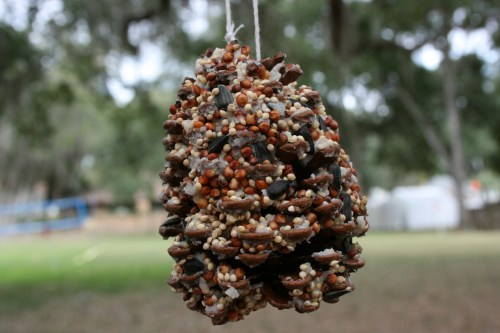 pinecone bird seed feeder