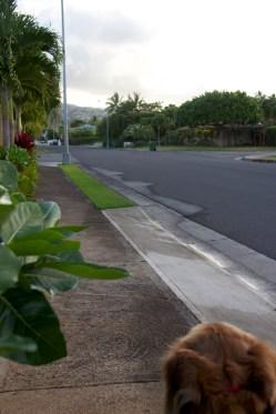 My habit is capturing photos during my walks.