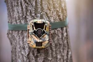 Best Affordable Trail Camera