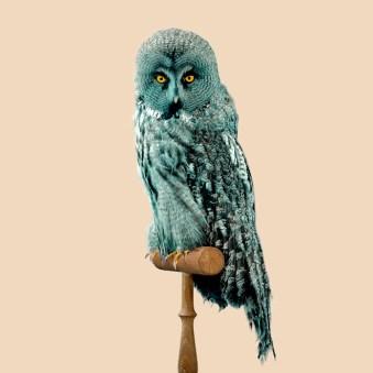 Nature 2.0 owl