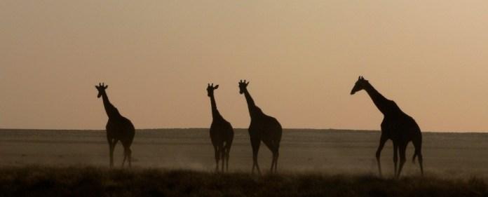 Namibia: Ein afrikanisches Ressourcen- und Investitionsparadies