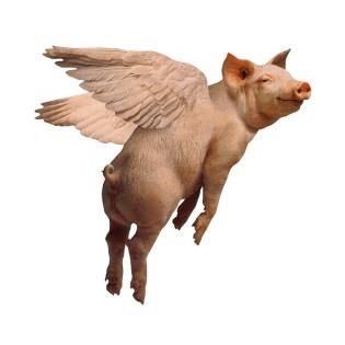 Alitas de cerdo