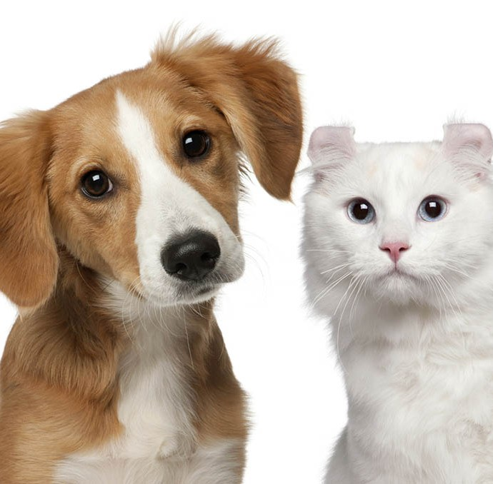 3 Tall Tale Signs That Your Pet May Have Food Allergies