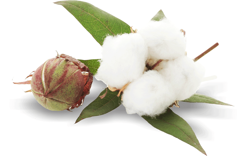 Cotton – Questions and Answers