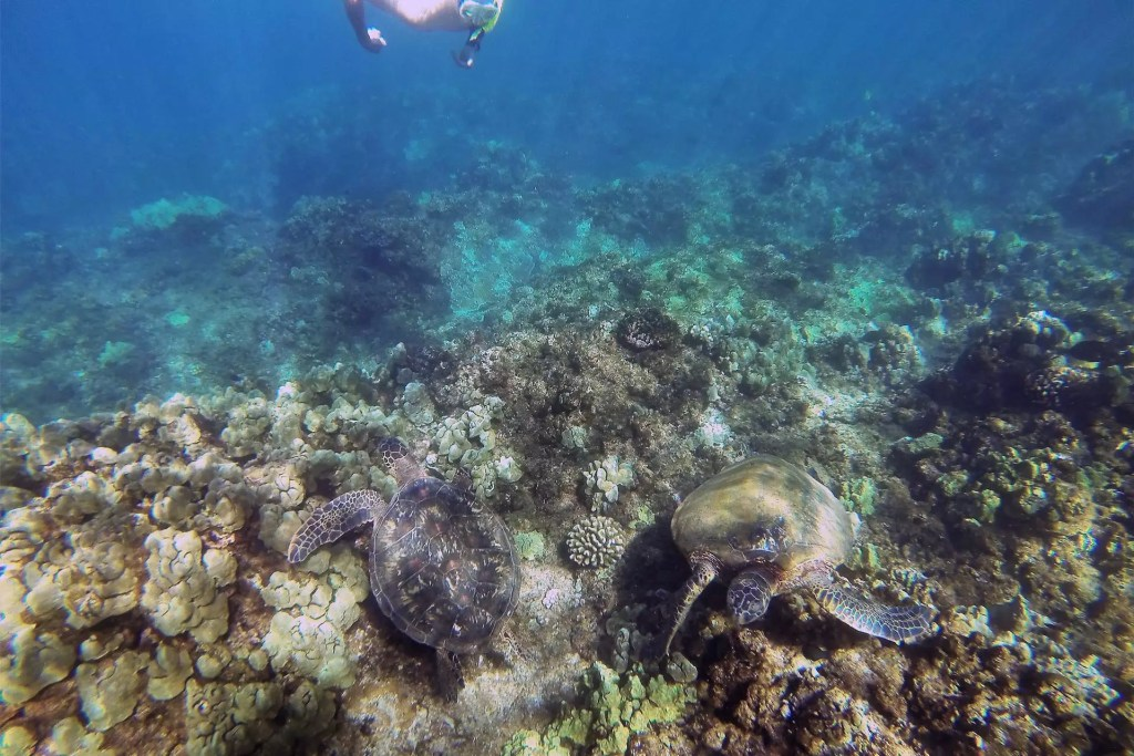 Dom Snorkelling with Turtles