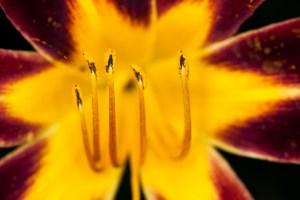 art floral 01
