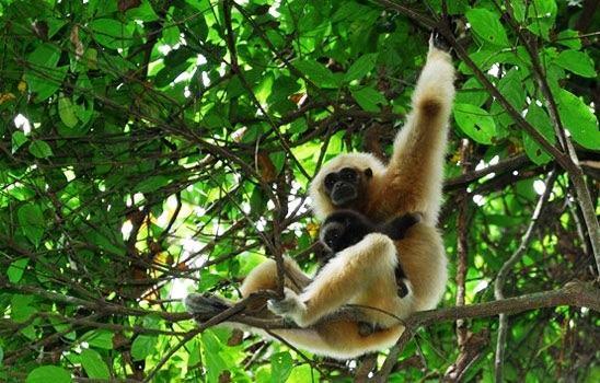 Các loài động vật hoang dã ở vườn quốc gia Phú Quốc