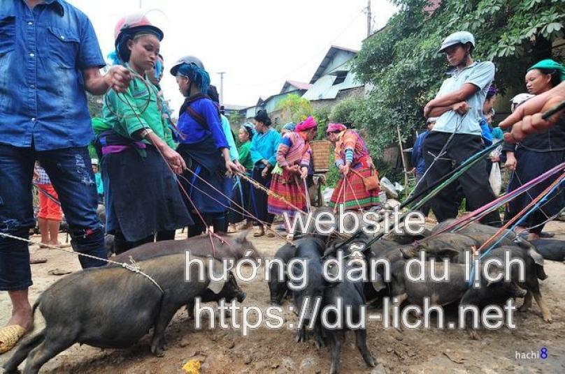 Hình ảnh mua bán lợn giống ở chợ phiên Sà Phìn Hà Giang