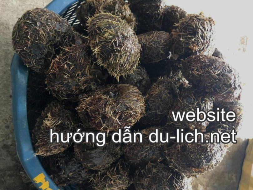 Món hải sản cảng Cầu Đá Nha Trang: nhum tươi sống