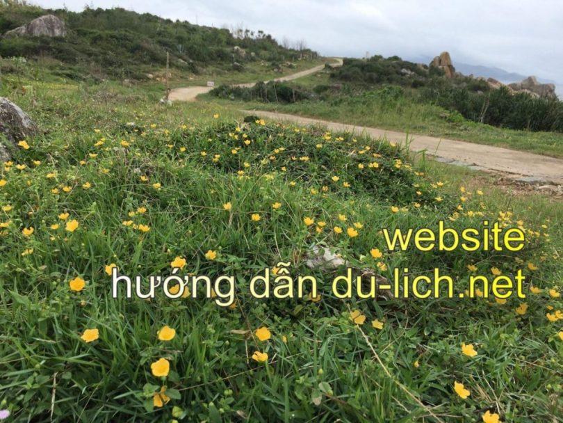 Du lịch Phú Yên hoa vàng cỏ xanh (5)
