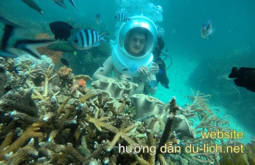 Không biết bơi bạn vẫn có thể lặn xuống để ngắm san hô như này