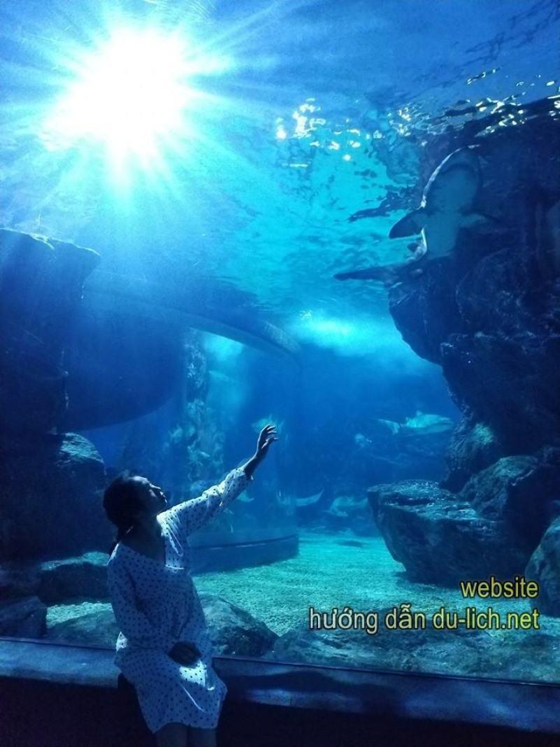 Check in thủy cung Siam, chơi với các em cá và sống ảo
