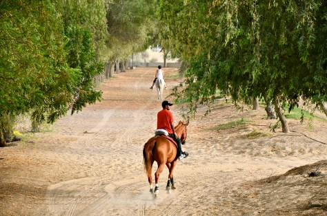 Private owners riding their horses at Desert Palm Per Aquum
