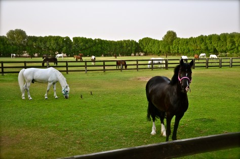 Horses owned by Private owners at Desert Palm Per Aquum