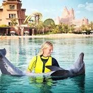delfin úszás dubai