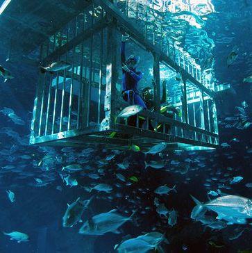 ketrec búvárkodás a dubai mall aquariumban