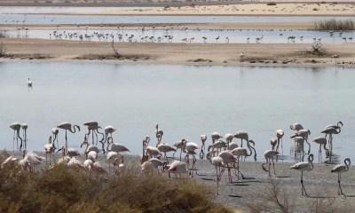L'Al Wathba Wetland Reserve è Area verde protetta