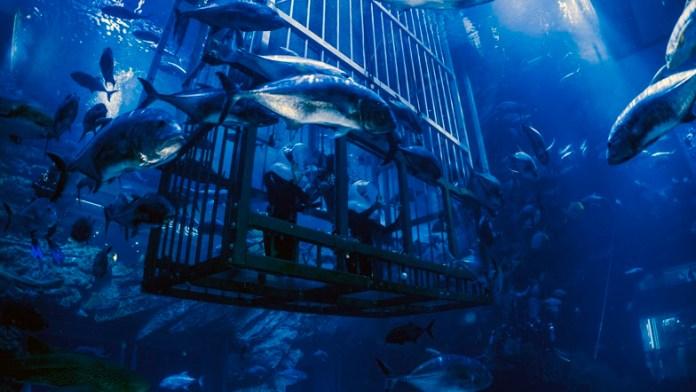 Dubai Aquarium Cage Snorkeling