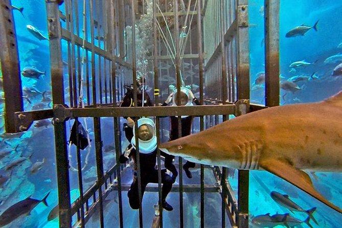 Dubai Aquarium Shark Walker