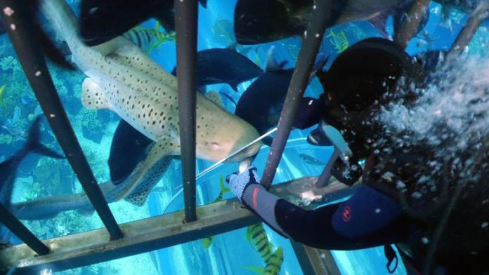 Things to do in Dubai Aquarium and Underwater Zoo