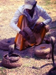 Snake charmer: Mind the cobra