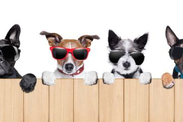 cool dogs on fence