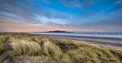 Dog walkers to be banned from Bull Island - Dublin Gazette Newspapers - Dublin News, Sport and Lifestyle