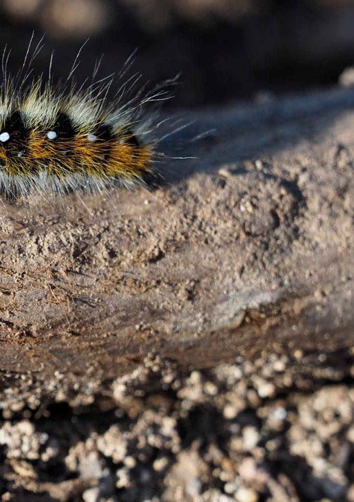 Portugal Caterpillar recht