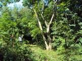 Dżungla - Jabłonna