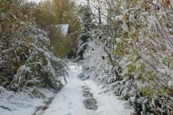 Te stare odmiany zbiera się późną jesienią. Było i tak, że zbieraliśmy z pod śniegu :)