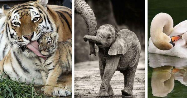 Несколько фото о том, почему мама — она и в Африке мама