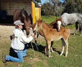 Chester and Lilly getting some baby training time with Gary Marshall. They've got him down their level already. Little cuties.