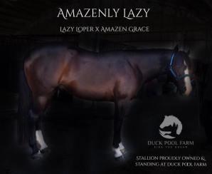 Amazenly Lazy 5202018