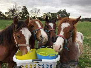 Kids! There is never enough...pats, buckets, treats 😂