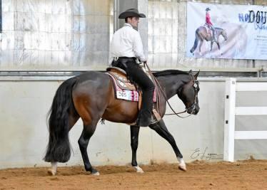 Thomas Ritchie (leased) riding Amazenly Lazy, (Lazy Loper x Amazen Grace), 5 yo, owner Robyn Davies