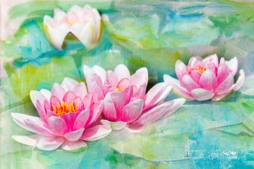 Water Lily- Four Pink Lilies with texture