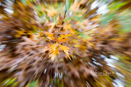 abstract-leaves-12