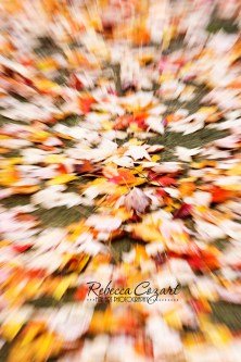 abstract-leaves-5